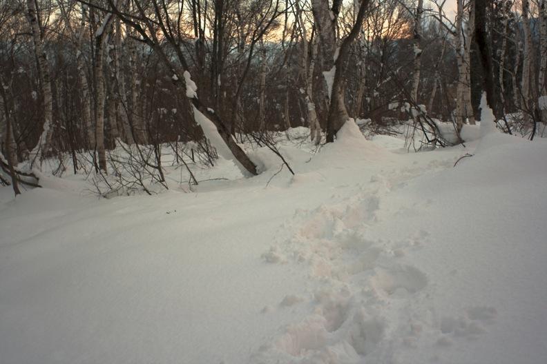 正月/雪_d0133581_21231431.jpg