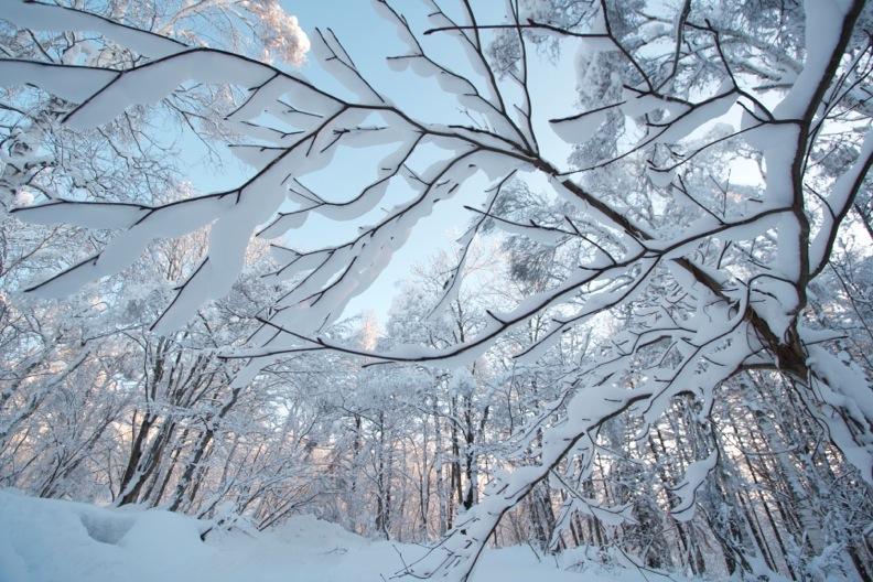 正月/雪_d0133581_21231434.jpg
