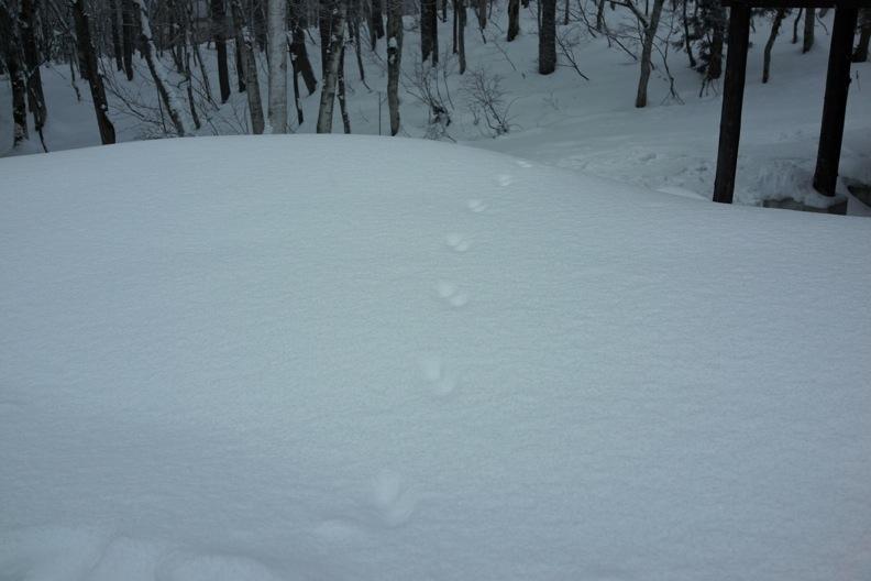 正月/雪_d0133581_21231446.jpg