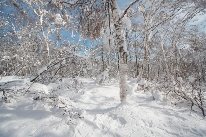 正月/雪_d0133581_21231482.jpg