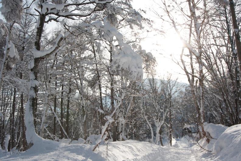 正月/雪_d0133581_21292375.jpg