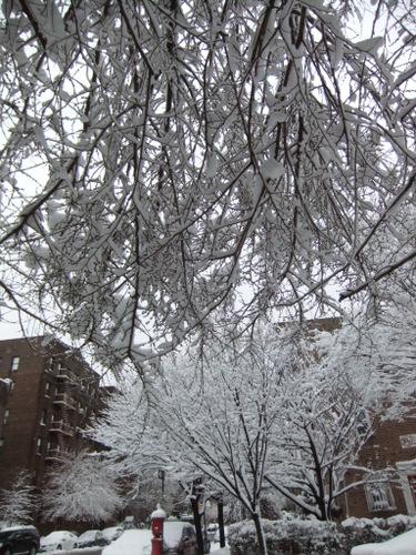 またまた大雪_c0064534_9564712.jpg