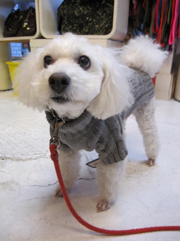 fabdog - chunky turtle neck sweater _c0151934_17522363.jpg