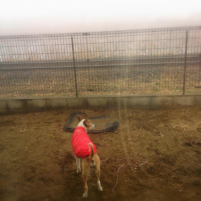 木更津濃霧に包まれる。_c0264744_14333315.jpg