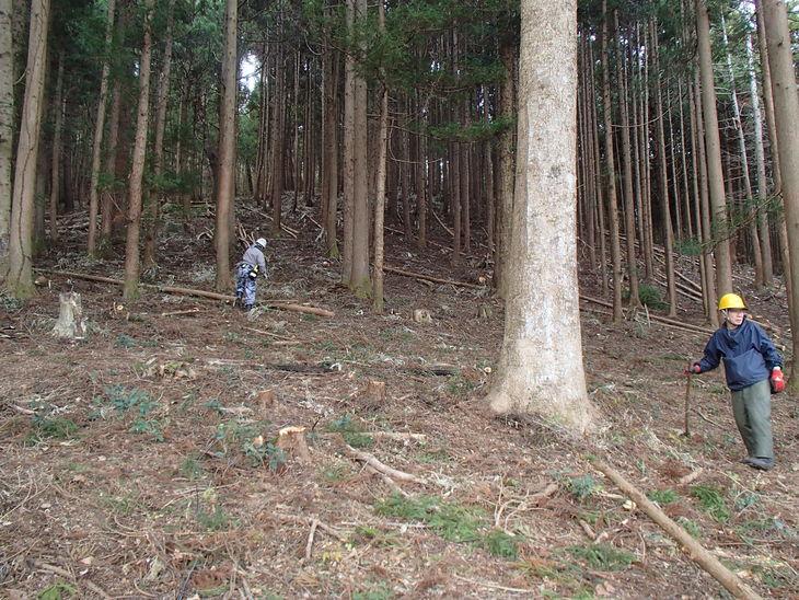 雄勝に東屋用の追加木材採り_e0332549_14174972.jpg