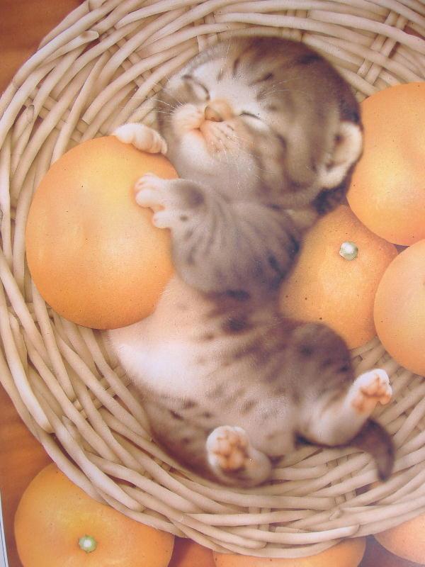 みかん・・・うめぇ~ (猫と梅)_c0328479_1030091.jpg