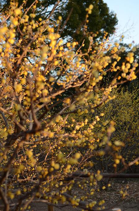 真冬の花園_b0194880_16411399.jpg