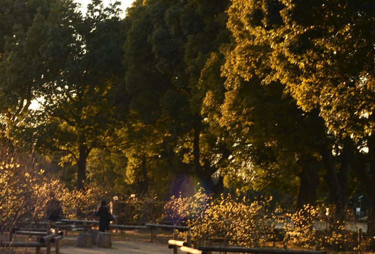 真冬の花園_b0194880_164115.jpg