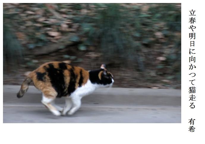 猫走_a0248481_2022184.jpg