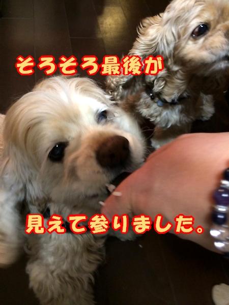 b0067012_922760.jpg