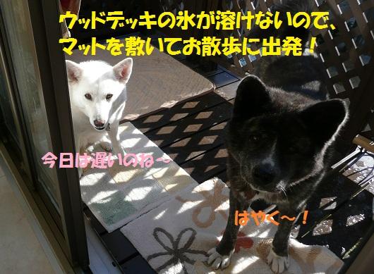 f0121712_1415973.jpg