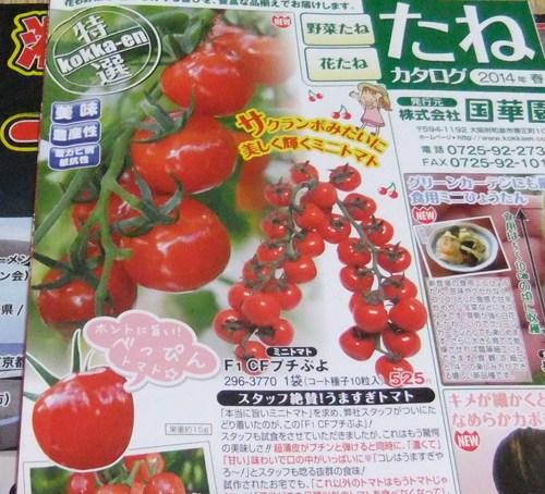 野菜の種,,,,_b0137932_21453545.jpg