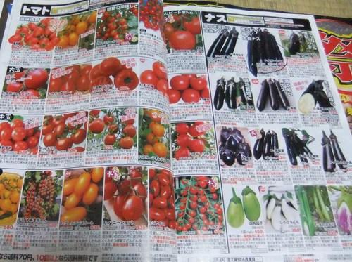 野菜の種,,,,_b0137932_21455893.jpg