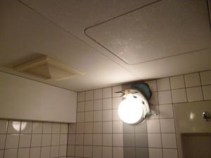 浴室換気扇取替工事_e0184941_15553653.jpg