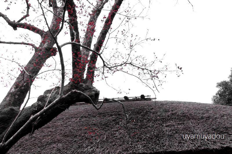 冬の京都・落柿舎_a0157263_06424458.jpg