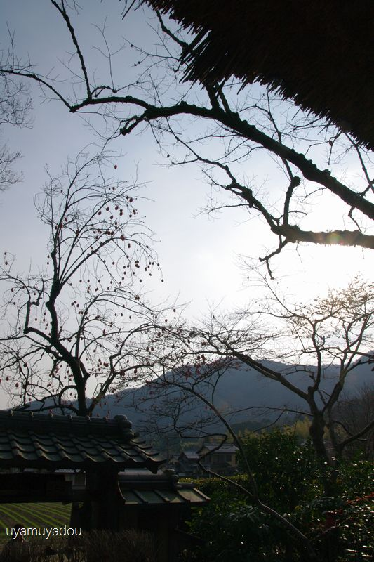 冬の京都・落柿舎_a0157263_06430238.jpg