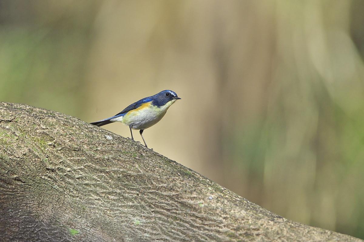 綺麗な成鳥との出会い(2)_d0125872_23395818.jpg