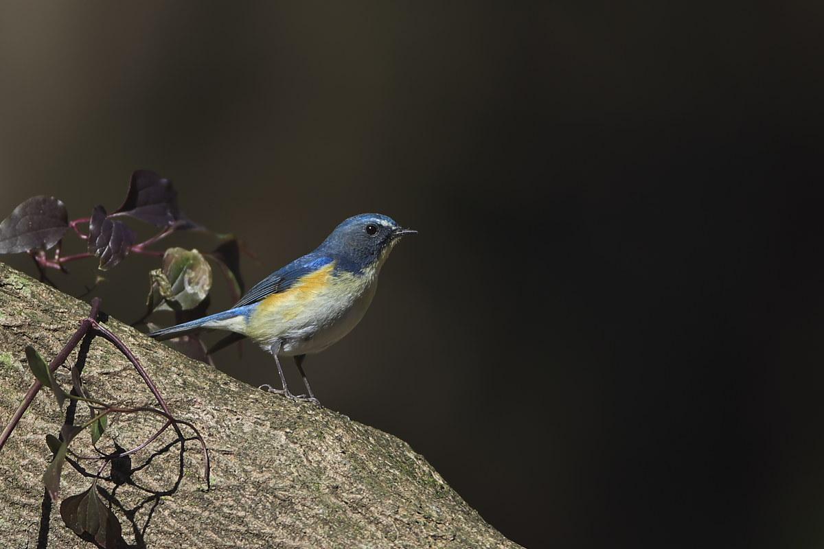 綺麗な成鳥との出会い(2)_d0125872_23411320.jpg