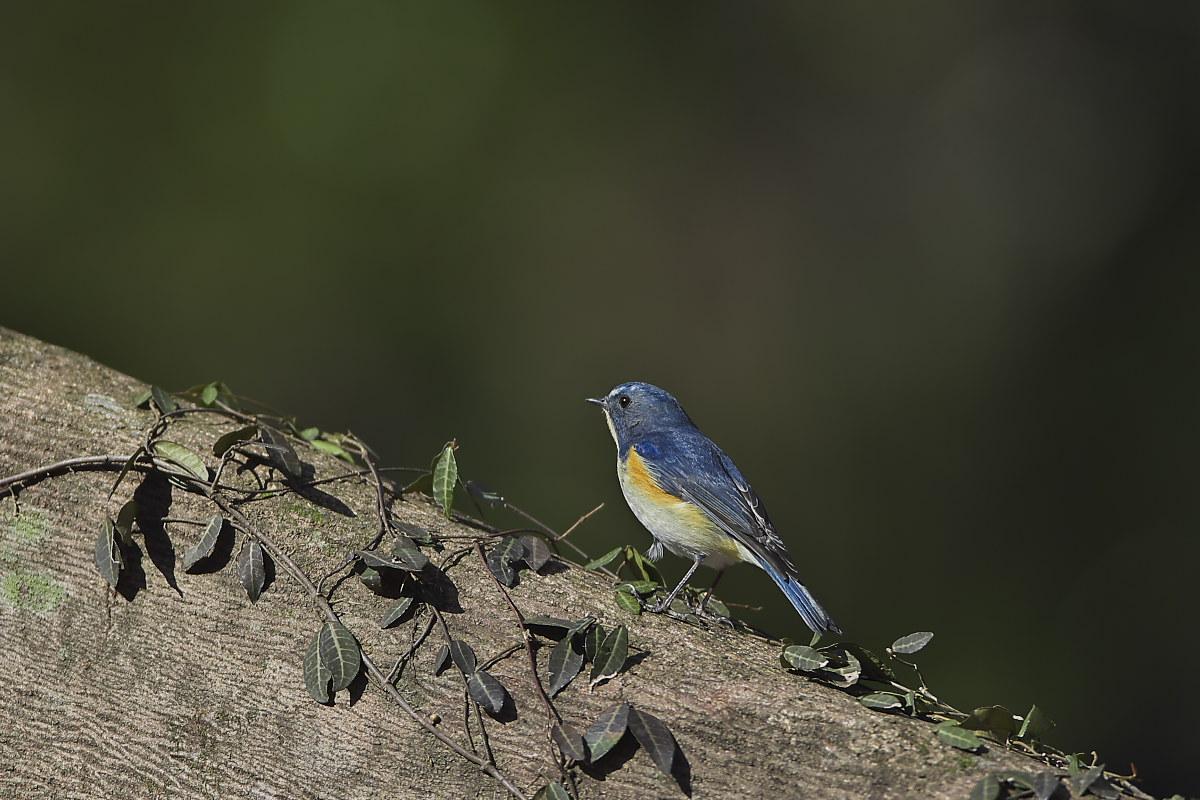 綺麗な成鳥との出会い(2)_d0125872_23425638.jpg
