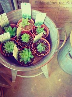 今週の鉢物さん_b0209477_18563523.jpg