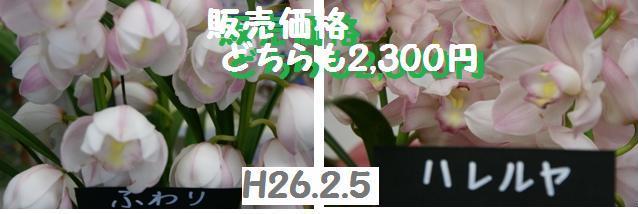 f0203094_15322046.jpg