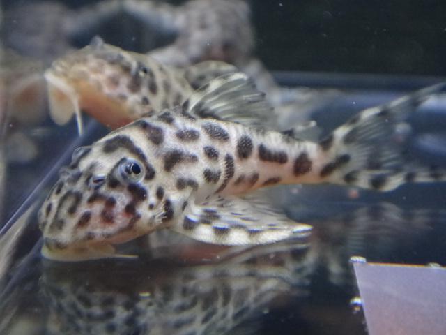 140206 熱帯魚・水草_f0189122_13155469.jpg