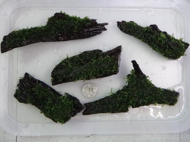 140206 熱帯魚・水草_f0189122_13293976.jpg