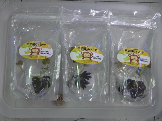 140206 熱帯魚・水草_f0189122_13302230.jpg