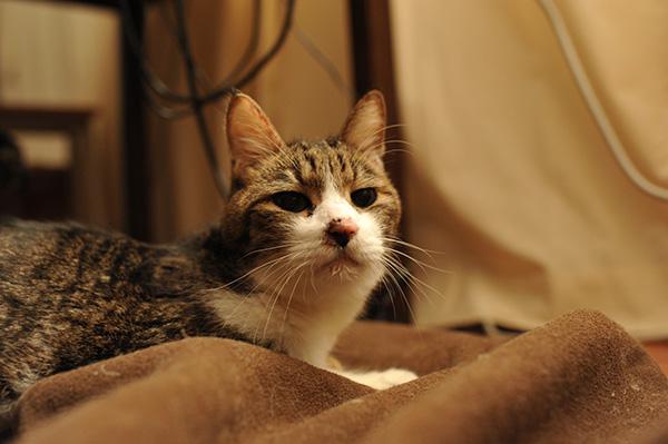 猫の甲状腺機能亢進症と体重減少&ロイヤルカナン(高栄養パウダー 免疫サポート)について(感想など)_b0162726_1084093.jpg