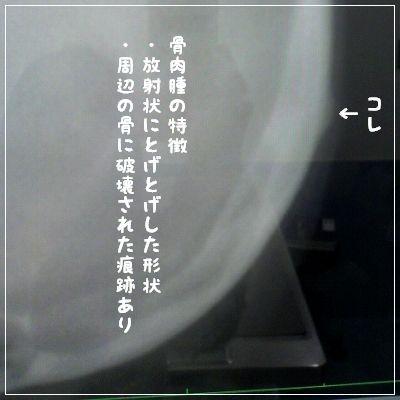 d0179828_11341491.jpg