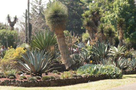 UNAM(メキシコ自治大学)の植物園へ (1)_a0254243_11422623.jpg