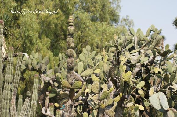 UNAM(メキシコ自治大学)の植物園へ (1)_a0254243_11465010.jpg