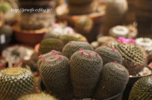UNAM(メキシコ自治大学)の植物園へ (1)_a0254243_11485024.jpg