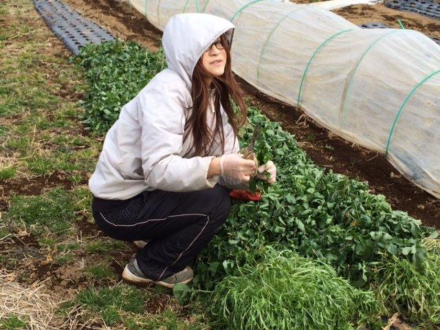 何故 12時 オープンなの? 畑の都合なんです 凍った野菜達・・・がんばっています・・_c0222448_13594120.jpg