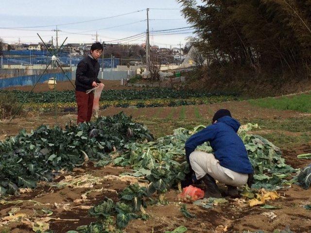 何故 12時 オープンなの? 畑の都合なんです 凍った野菜達・・・がんばっています・・_c0222448_14030517.jpg