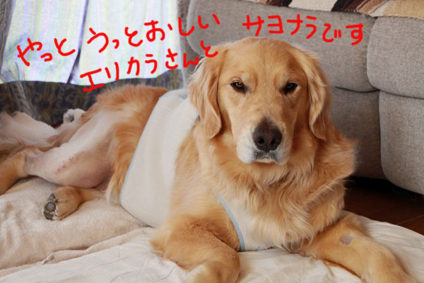 f0297764_14224493.jpg