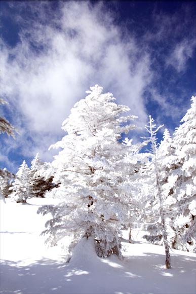厳冬の横岳・坪庭_e0305388_11531922.jpg