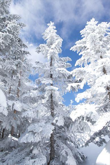 厳冬の横岳・坪庭_e0305388_1153275.jpg