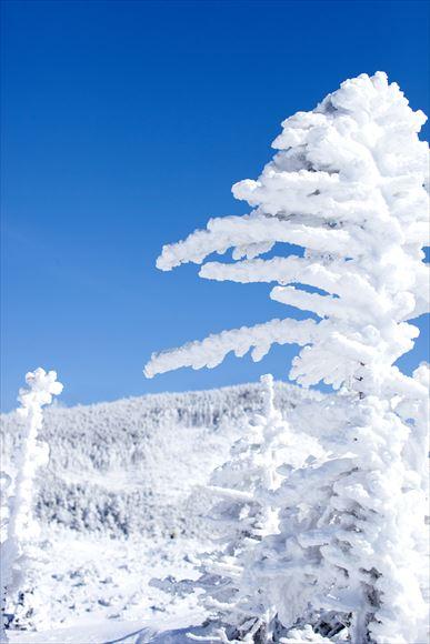 厳冬の横岳・坪庭_e0305388_11533799.jpg
