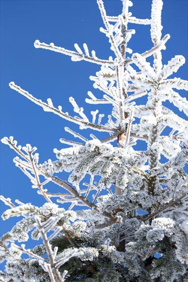 厳冬の横岳・坪庭_e0305388_11535659.jpg