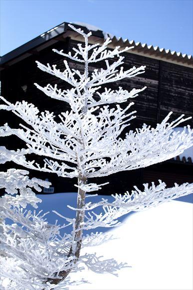 厳冬の横岳・坪庭_e0305388_1154185.jpg