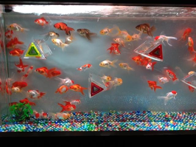 アートアクアリウム展 大阪・金魚の艶_f0204295_15441838.jpg