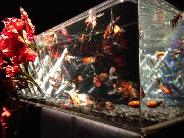 アートアクアリウム展 大阪・金魚の艶_f0204295_15541432.jpg