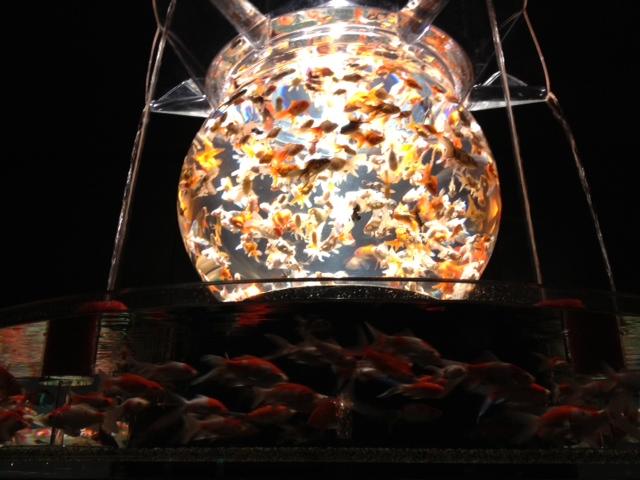 アートアクアリウム展 大阪・金魚の艶_f0204295_15575058.jpg