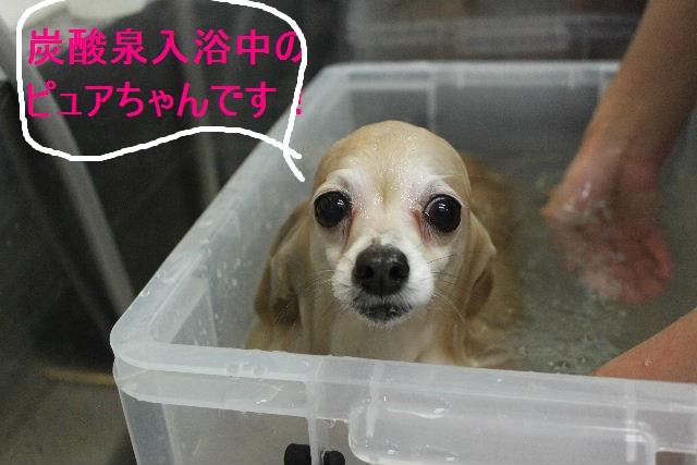 ばっさり!!_b0130018_0251420.jpg
