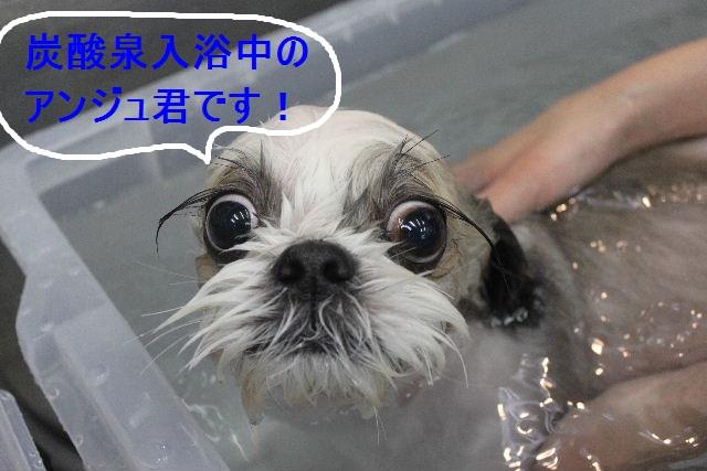 ばっさり!!_b0130018_0293851.jpg