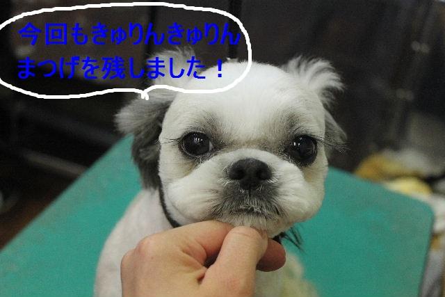 ばっさり!!_b0130018_0303236.jpg