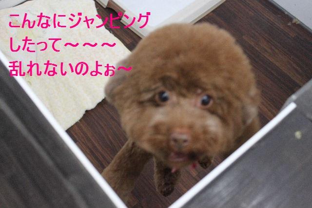 ばっさり!!_b0130018_035611.jpg