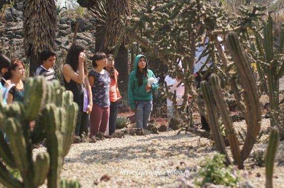 UNAM(メキシコ自治大学)の植物園へ (2)_a0254243_1143147.jpg