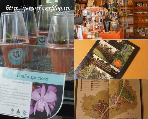 UNAM(メキシコ自治大学)の植物園へ (2)_a0254243_1165055.jpg